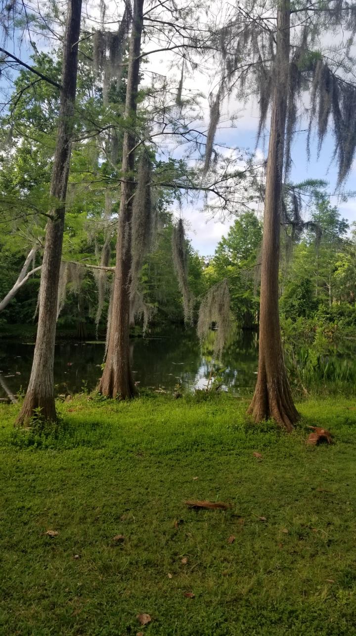 Mead Botanical Garden{Florida}