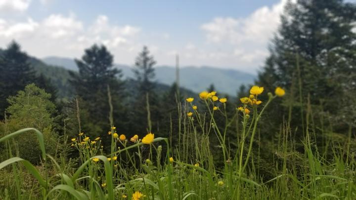 Smoky Mountain National Park {NorthCarolina}