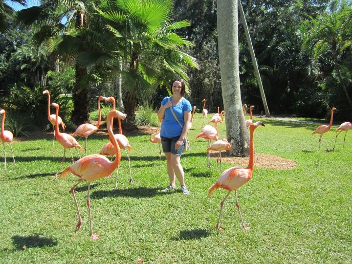 Sarasota Jungle Gardens{Florida}