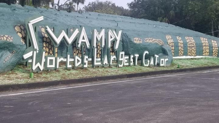 """""""Swampy"""" the world's largest gator{Florida}"""