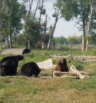 Yellowstone Bear World{Idaho}