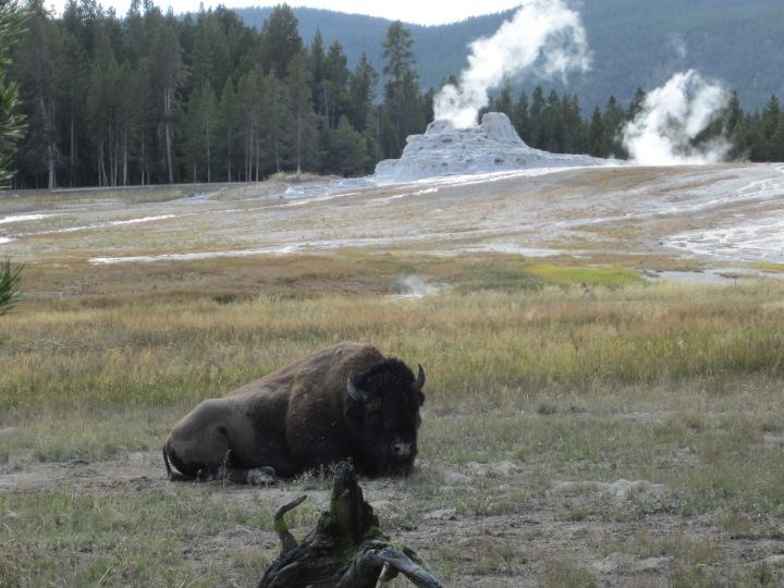 Old Faithful- Yellowstone National Park{Wyoming}