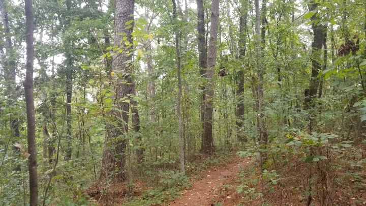 Booker T. Washington State Park{Tennessee}