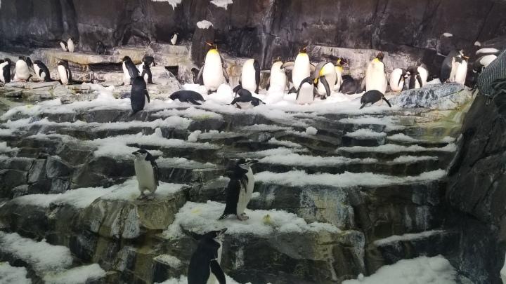 Penguins of Antarctica- Sea World{Florida}