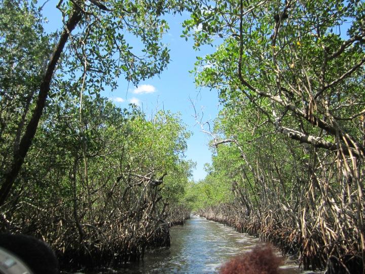 Everglades National Park{Florida}
