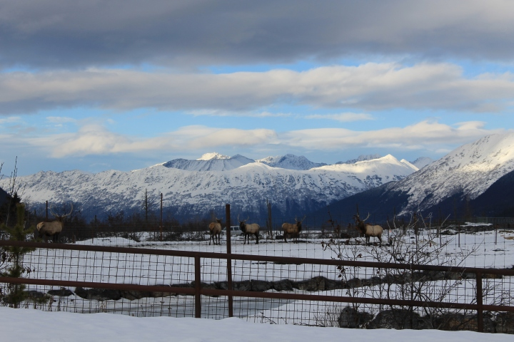 Alaska Wildlife Conservation Center{Alaska}