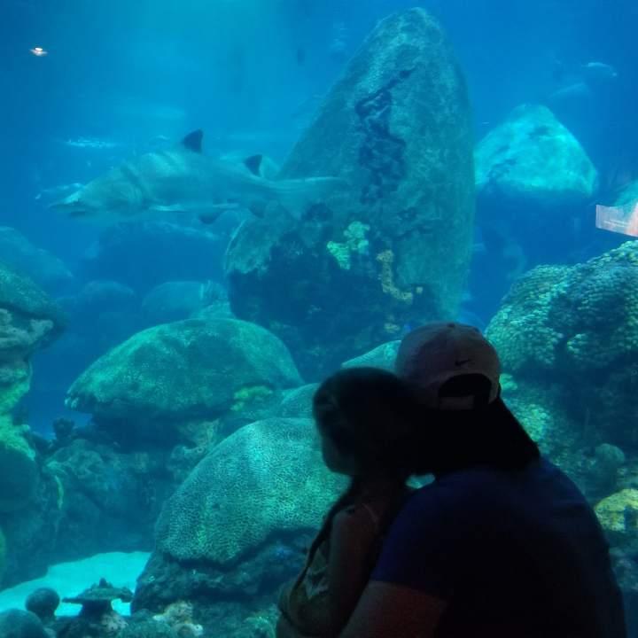 Tennessee Aquarium {Tennessee}